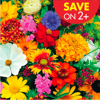 Garden Mats Promotion Image