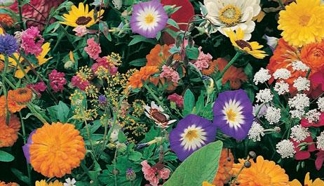 For the Gardener