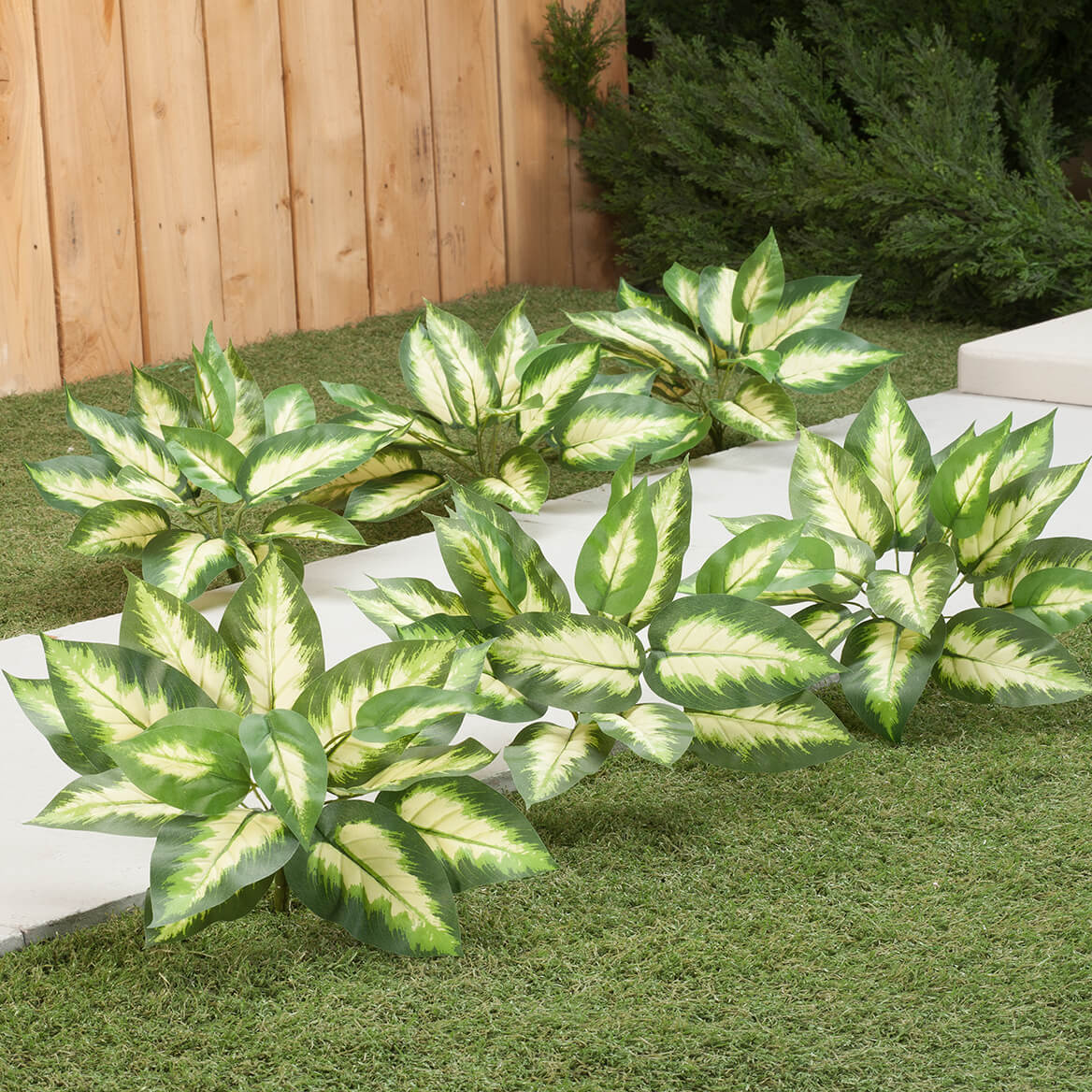 Hosta Bushes, Set of 3 by OakRidge™-362046