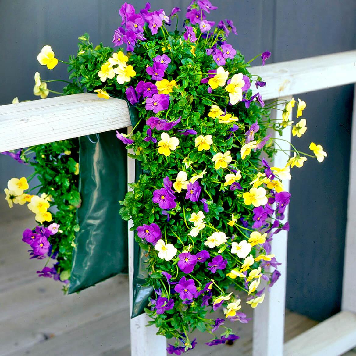 Bag O'Blooms® Shade Loving Pansy Saddle Bag-362060