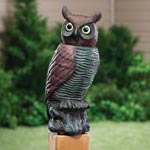 Top Items - Motion Sensor Owl