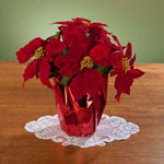 Decorations & Storage - Christmas Poinsettia 12""