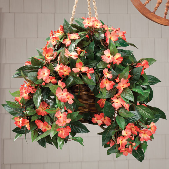 Impatiens Hanging Bush
