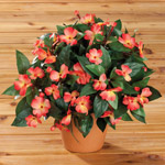 Artificial Impatiens