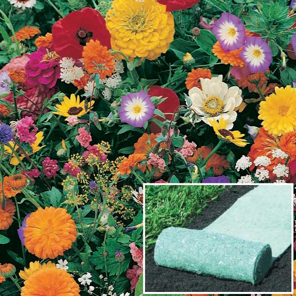 Garden Fragrance Roll Out Flowers