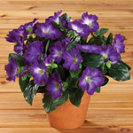Outdoor Décor - Artificial Petunia Potted Bush
