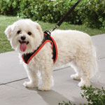 Pets - Mesh Dog Harness With Leash