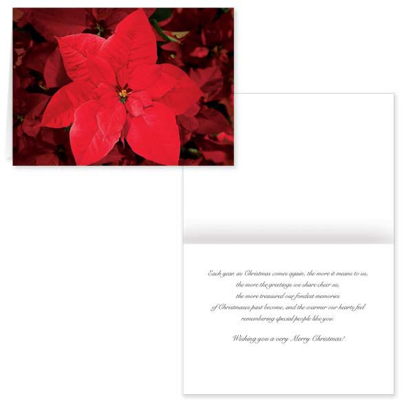 Christmas Poinsettia Card Set of 20
