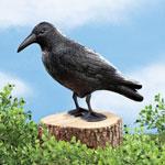 Pest Control - Scare Crow