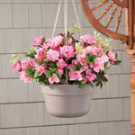 10 Inch Hanging Basket