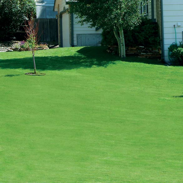 Canada Green™ Grass Seed