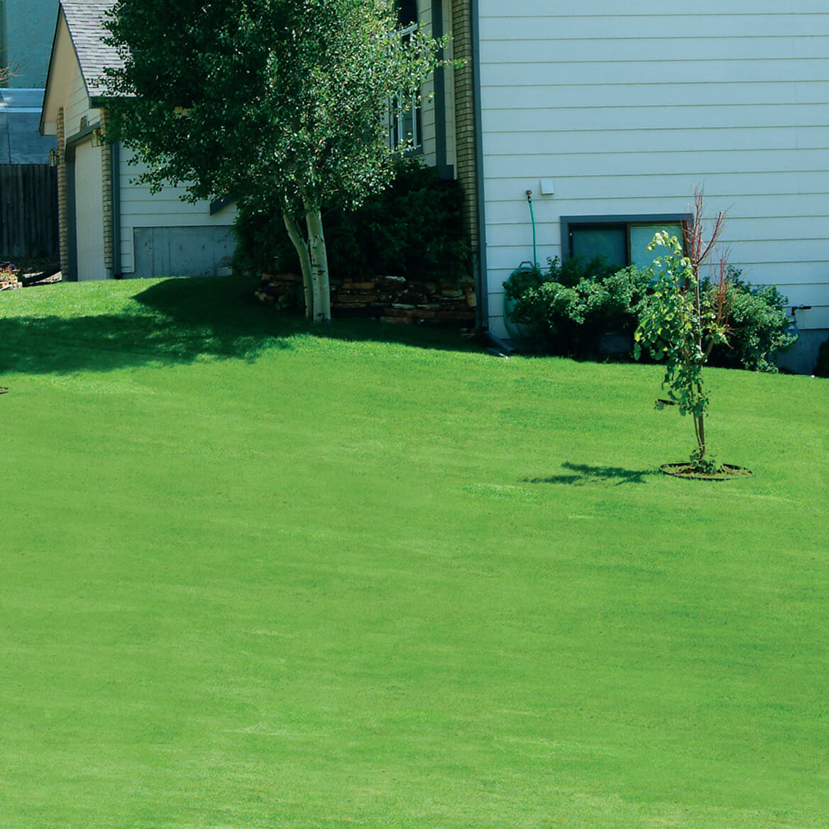 Canada Green™ Grass Seed-345515