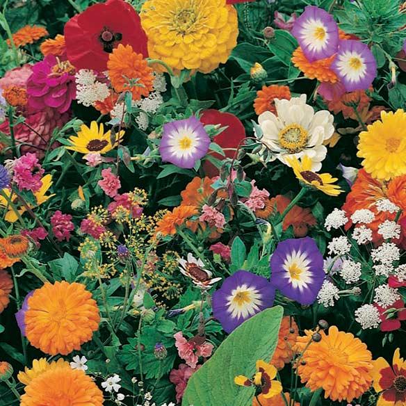 Instant roll out flower garden instant flower garden walter drake
