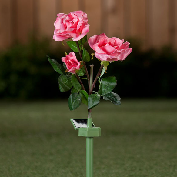 Solar Powered Garden Roses Gorgeous day and night, these solar-powered garden roses store up sunshine, then illuminate like magic at dusk! With an LED bulb hidden in their tight bud centers, the lifelike blossoms radiate with a colorful glow, lending soft lighting for outdoor dining, entertaining or relaxing on the patio. Simply stake the artificial flowers in a sunny location in lawn or garden to charge the AAA battery for automatic on/off convenience. Beautifully crafted with realistic thorn detail, the stalk features 3 nylon rose flowers and bendable plastic stems. Specify color: pink or yellow. 24  H with stake.