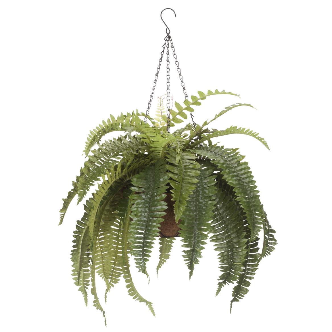 Fully Assembled Fern Hanging Basket by OakRidge™-359080