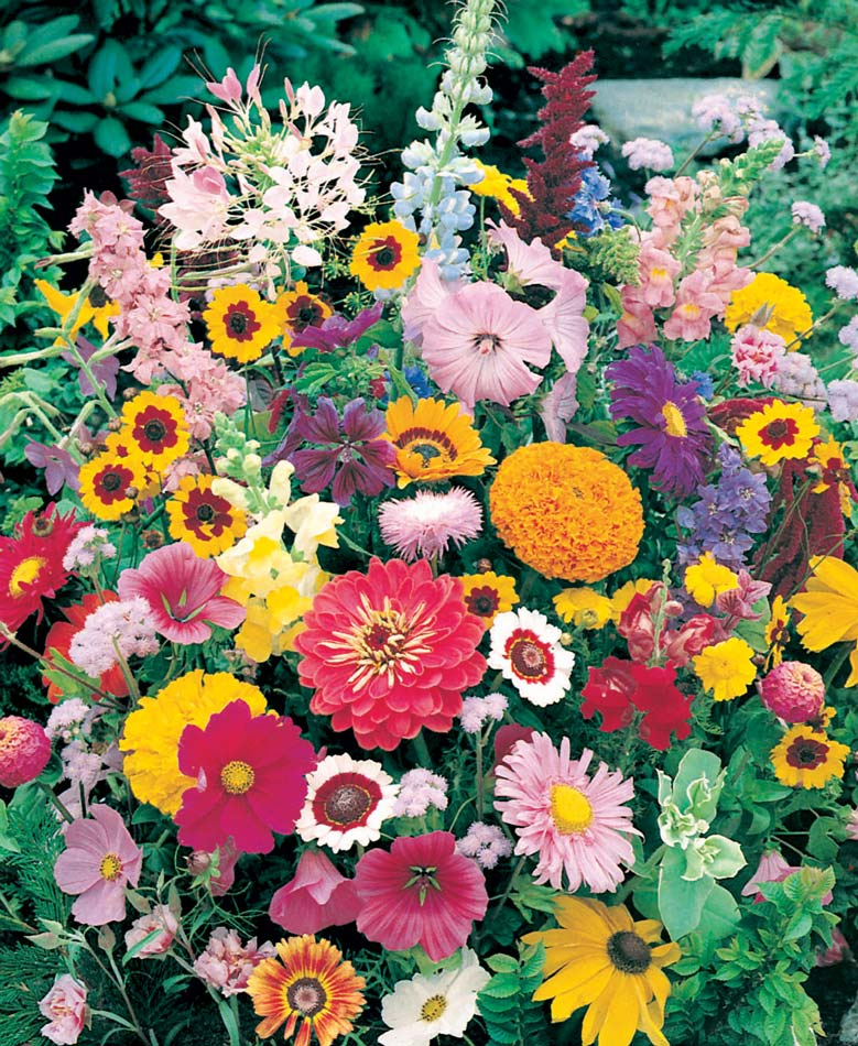 Instant Roll Out Flower Garden High and low borders of this instant roll out flower garden create a row of blossoming colors! Roll out flower garden has over 500 choice seeds produce assorted annual beauties. High border has Giant Zinnia, Cosmos, Calendula, Scabiosa and more. Low mixture has Marigold, Dianthus, California Poppy and 3 more. Each is 20 x 72.